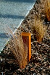 Path light and tussock